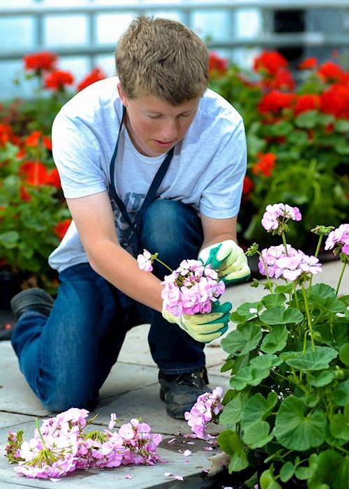 Garden Design Horticulture Wcg Warwickshire College