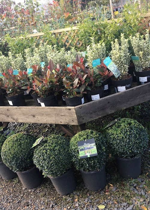 Pershore College Garden Centre And Nursery Wcg